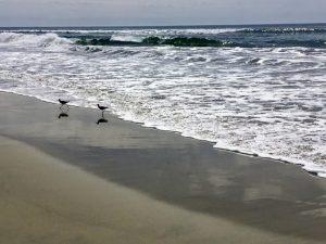 Sandpipers Saint Malo Beach