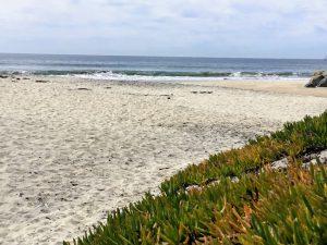 Ocean waves beach iceplant