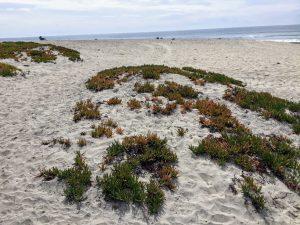 Saint Malo Beach sand dune