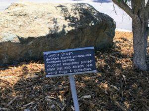 Coyote Brush Native Garden Information