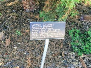 Gowen Cypress Information