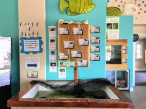 Discovery Center Adopt a Fish Display