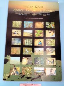 California Native Plant Poster