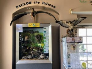 Bird Room Agua Hedionda Lagoon Discovery Center