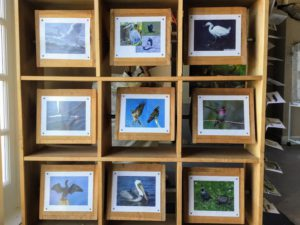 Nine professional bird portraits information tiles