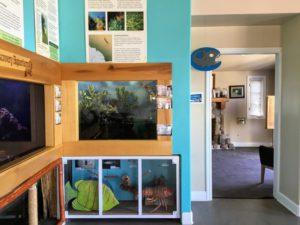 Fish Aquarium Room tanks