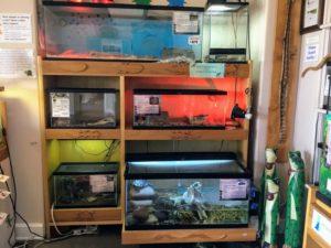 Reptile Displays six tanks