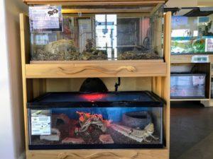 Reptile Room Agua Hedionda Lagoon Discovery Center