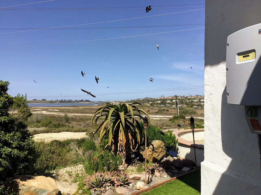 Swallows outside Agua Hedionda Lagoon Discovery Center