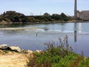 Agua Hedionda Lagoon mudflats with birds