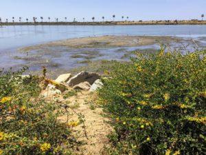 Close up bird wading mudflats lagoons