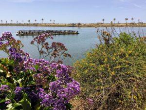 White seabass grow out pen Agua Hedionda Lagoon