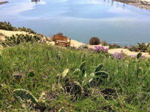 Overlooking bench seating area Agua Hedionda Lagoon