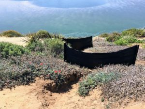 Black plastic sheets Solarization Project