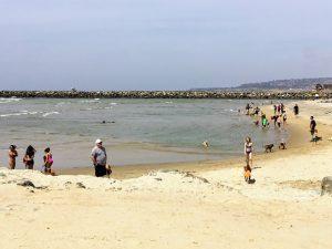 Ocean Beach Dog Beach Ocean Beach
