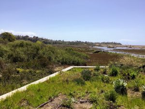 Second Story View From San Elijo Lagoon Nature Center