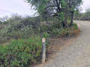 Coastal Sage Scrub Panhe Nature Trail