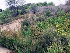 Coastal Sage Scrub Beach Trail Trestles