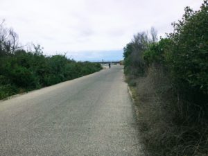 Trestles Beach Trail Near End