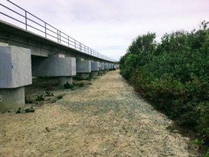 Trestles Beach Trail Near San Mateo Lagoon