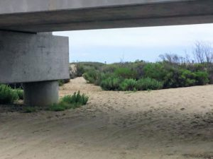 Trestles Beach Sand Dunes