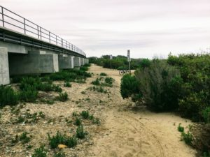 Trestles Dunes next to Train Trestle