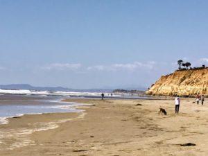 Del Mar City Beach Dog Friendly Beaches in San Diego