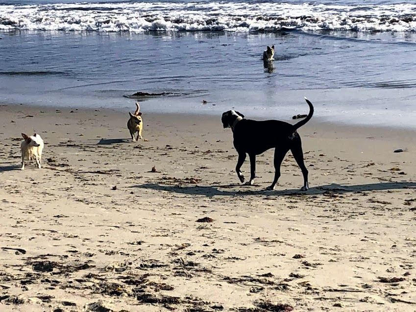 dogs dogpatch beach san onofre state beach