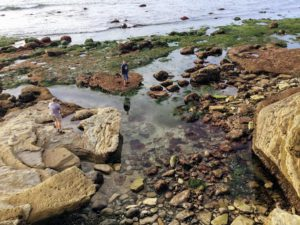 Low Intertidal Zone Cabrillo San Diego Tide Pools