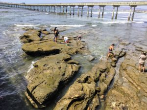 Ocean Beach Tide Pools San Diego Tide Pools