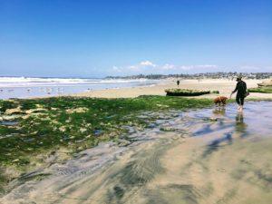 Seaside Beach Cardiff State Beach Dog At Tidepools