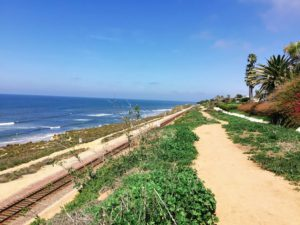 South Beach Del Mar Dog Friendly Beaches in San Diego