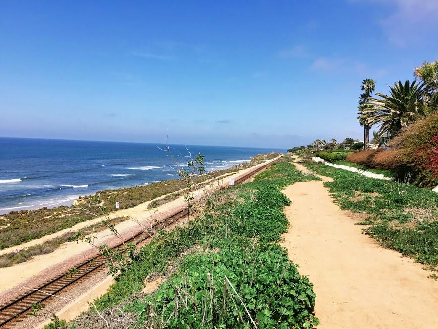 Dog Friendly Beaches in San Diego – San Diego Beach Secrets