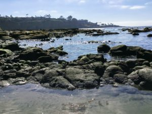 South La Jolla Shores San Diego Tide Pools