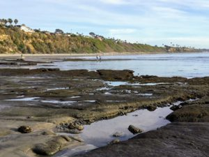 Swamis Tide Pools San Diego Tide Pools