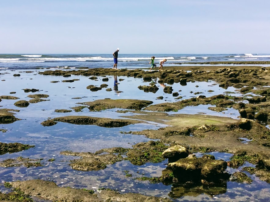 Top Ten Best San Diego Tide Pools San Diego Beach Secrets