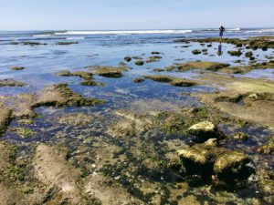 Terramar Tide Pools San Diego Tide Pools
