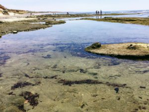 Terramar Ide Pools 6 San Diego Tide Pools