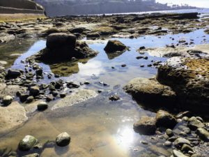 Tide Pools South La Jolla Shores San Diego Tide Pools
