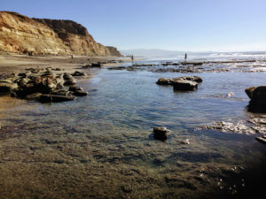Torrey Pines Shallow Reef near Flat Rock Beach