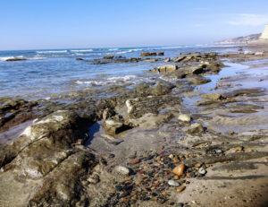 Torrey Pines Reef exposed low tide