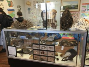 Bird Display Case inside nature center