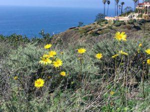 Biodiversity Trail Coast View Coastal reserve la jolla
