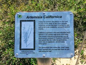 California Sagebush information sign hidden gems in San Diego