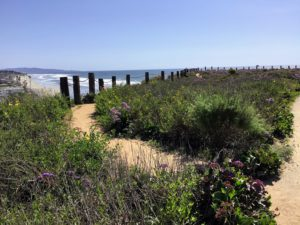 Del Mar North Beach bluff view path