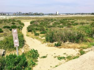 Dog Beach Path Hidden Gems in San Diego
