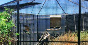 Golden Eagle Swing Living Coastal Discovery Center