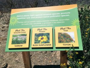 Native Plant Information Southern California