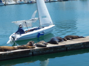 Oceanside Harbor CA sea lions dock sailboat