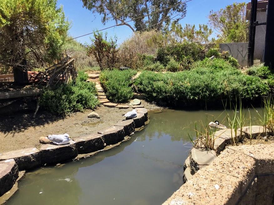 Shorebird Aviary Living Coast Discovery Center
